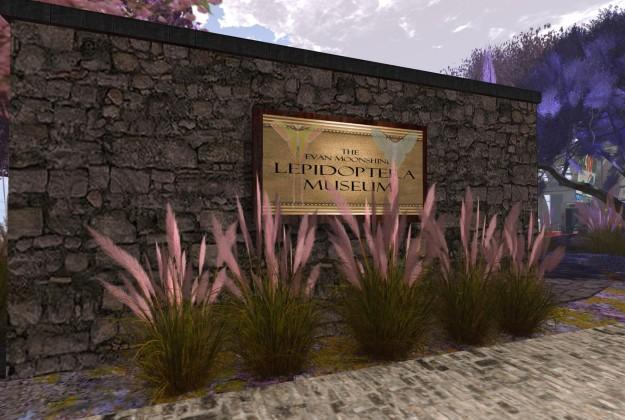 Evan Moonshine - Lepidoptera Museum