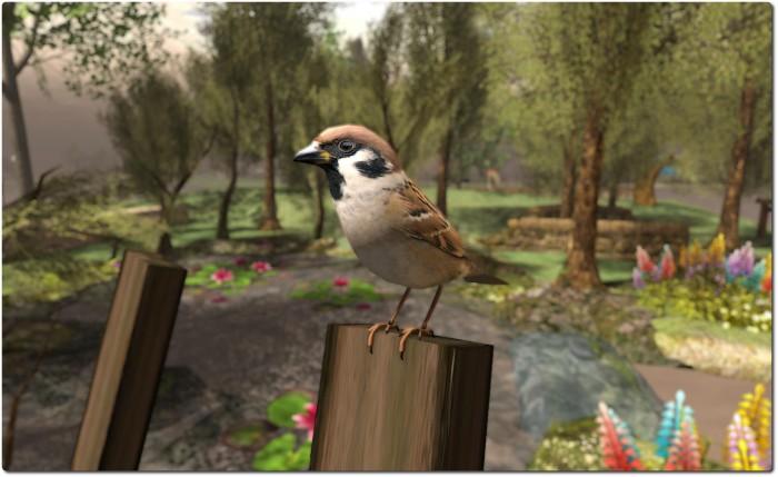Morgan Garrat's Eurasian Sparrows help bring the place to life