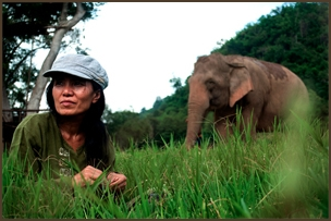 """Lek"" Chailert, founder of SEF and the Elephant Nature Park in Thailand"