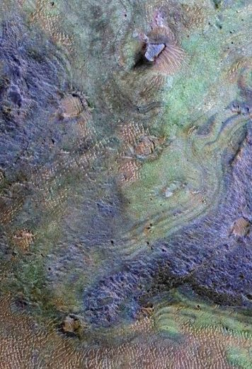 The study of Nili Fossae used spectrograph data gathered from several instruments flown on various craft in Mars orbit, including the CRISM instrument on NASA's Mars Reconnaissance Orbiter, in which carbonates in the region are indicated by the green colouring