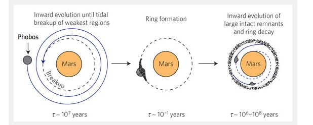 How Phobos might break-up and form a ring around Mars in about 25-30 million years from now