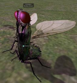Odd deformations seen in the Bento viewer: Medhue's fly should be standing on all six legs, not standing upright