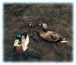The TLC swimming ducks are superb: low impact, a good price, and so easy to set up on any kind of water.