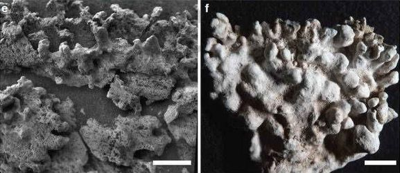 A closer view of the structures as images by Spirit in 2006, and a an image of the opaline silica at El Tatio taken at the same distance and resolution. Credit: ASU/Ruff & Farmer